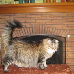 Brick Fireplace Products Paint Colors Consultation Hurley