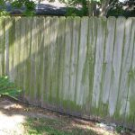 Mildewed And Dirty Fence