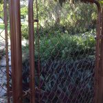 Just Spray Ed Chain Link Fence Gate Looks Much Better Any